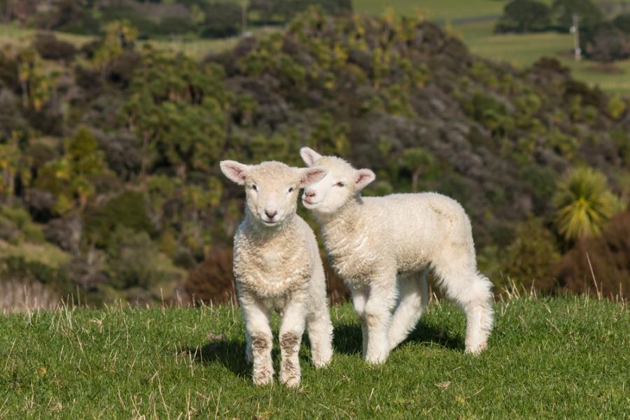Lambing and bucolic farm stays for the Easter holidays