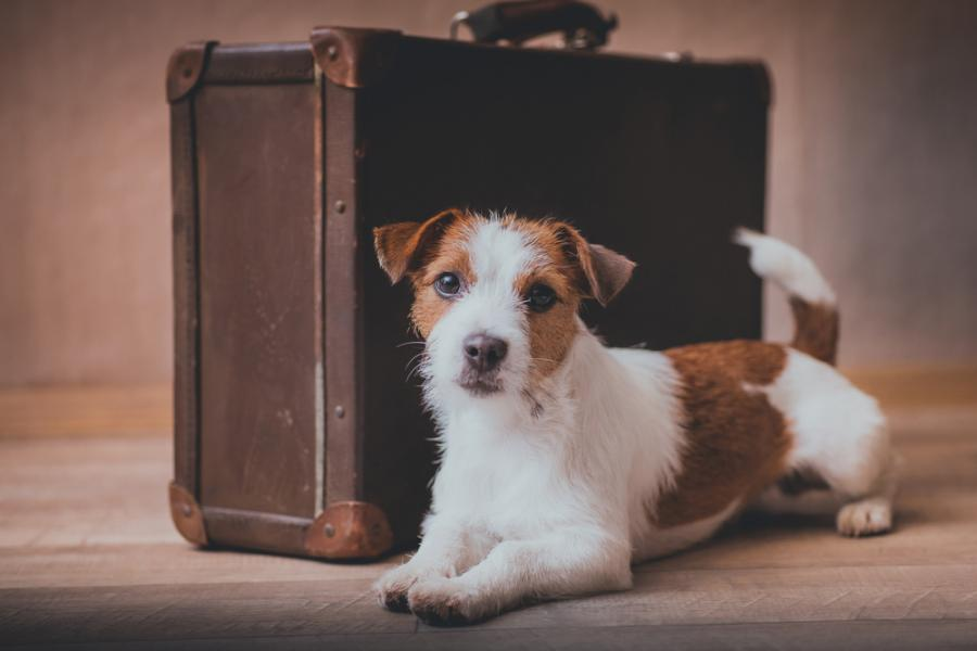 What to pack for your pooch on a pet friendly holiday