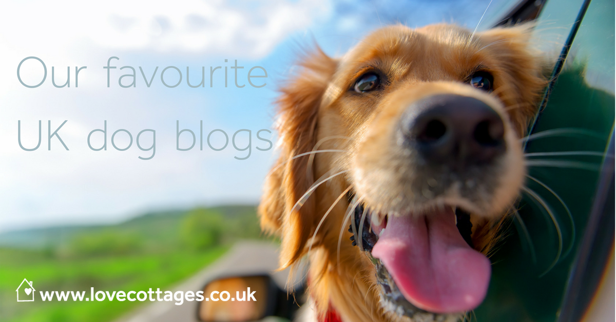 UK's best dog blogs doggie bloggers