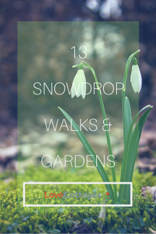 13 snowdrop walks & gardens across the UK to visit this spring - perfect for a Sunday stroll before or after a Sunday roast at the pub