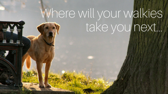 best UK dog walks for pet friendly staycations and holiday cottages accepting pets
